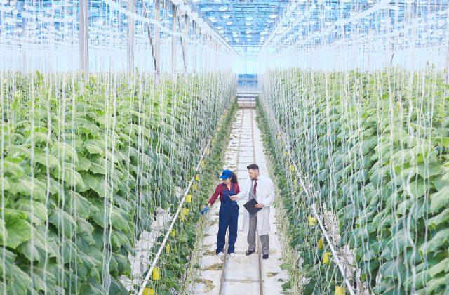 scientist-on-industrial-plantation-N8MFDWU.jpg